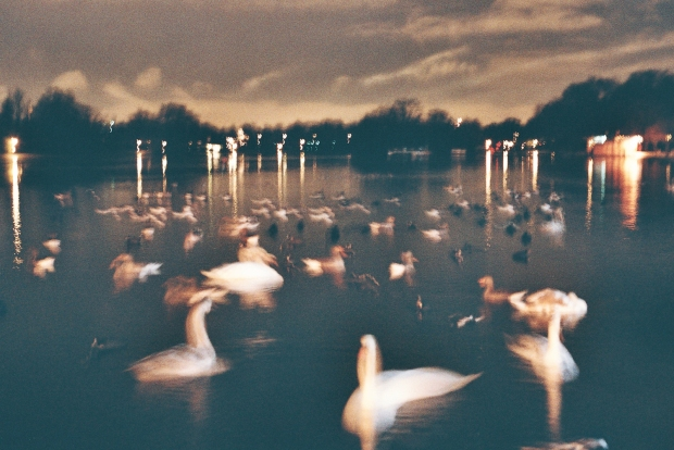 this table is sad because no one is sitting at it... (winter swans in the Serpentine)