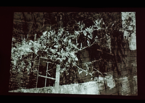 Chasing Shadows (ivy / wire window transition) - Hackney WickED Cinema Lounge projection